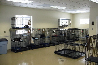 New Shelter Cattery